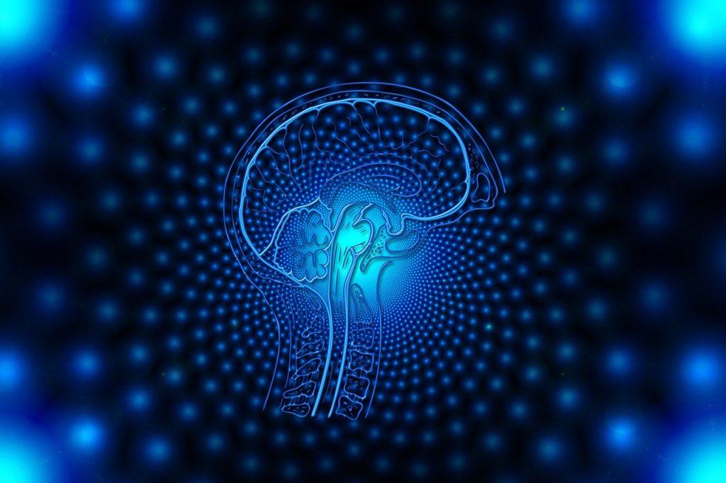 brain, web, network
